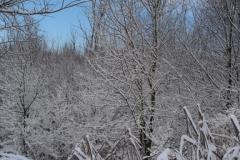 Árboles nevados (Fotografía de Mª Jesús García)