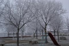 Cambricia en parque (Fotografía de Cristina García)