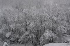 Árboles cubiertos por la nieve (Fotografía de Mª Jesús García)