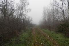 Niebla en los huertos