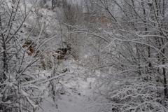 Senda nevada (Fotografía de Mª Jesús García)