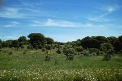 Cirrus fibratus intortus en Maire de Castroponce