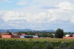 Cumulus calvus